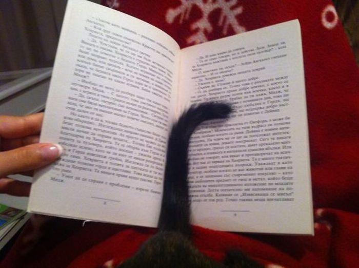 Gatos_que_querem_a_sua_atenção_no_momento_da_sua_leitura (2)
