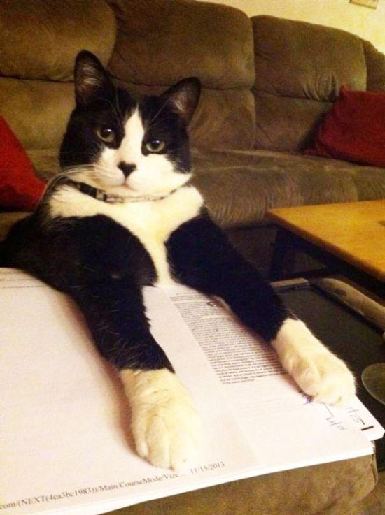 Gatos_que_querem_a_sua_atenção_no_momento_da_sua_leitura (20)