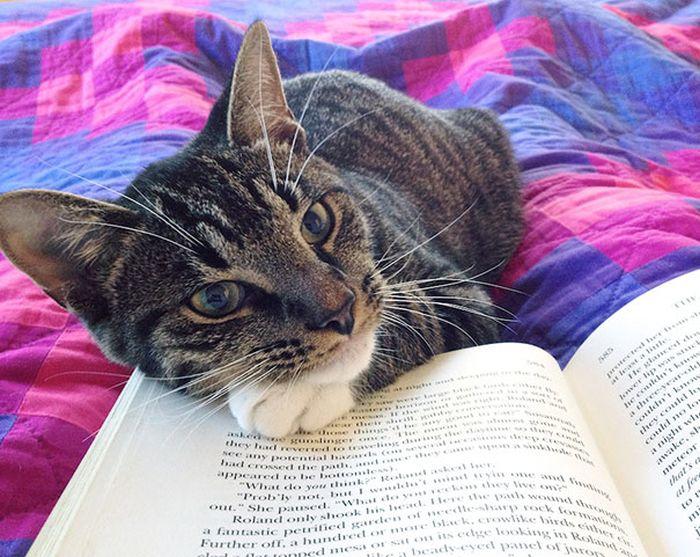 Gatos_que_querem_a_sua_atenção_no_momento_da_sua_leitura (21)