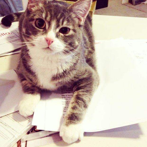 Gatos_que_querem_a_sua_atenção_no_momento_da_sua_leitura (23)