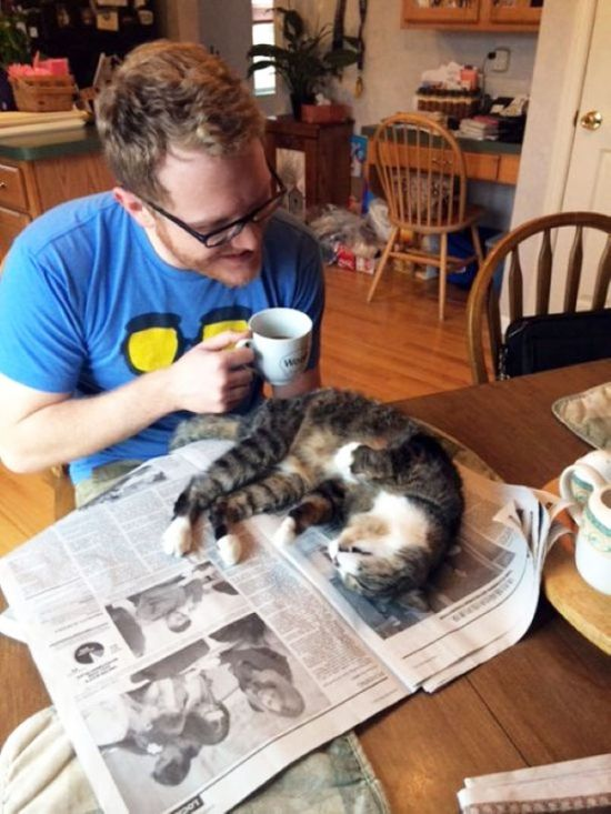 Gatos_que_querem_a_sua_atenção_no_momento_da_sua_leitura (26)