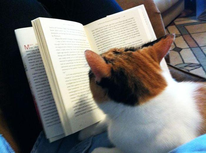 Gatos_que_querem_a_sua_atenção_no_momento_da_sua_leitura (30)