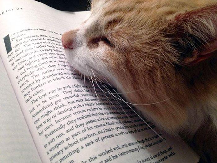 Gatos_que_querem_a_sua_atenção_no_momento_da_sua_leitura (31)