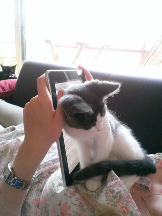 Gatos_que_querem_a_sua_atenção_no_momento_da_sua_leitura (32)