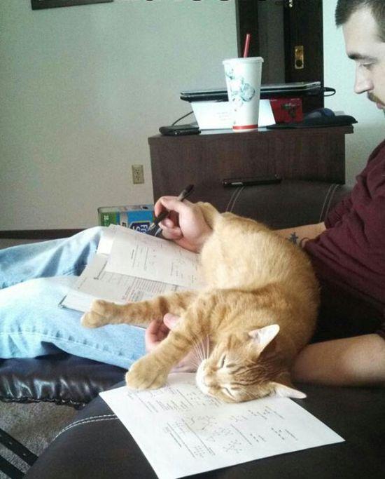 Gatos_que_querem_a_sua_atenção_no_momento_da_sua_leitura (33)