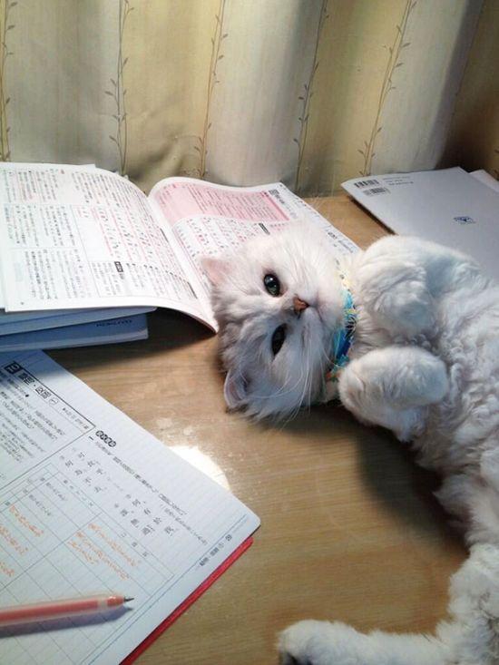Gatos_que_querem_a_sua_atenção_no_momento_da_sua_leitura (4)