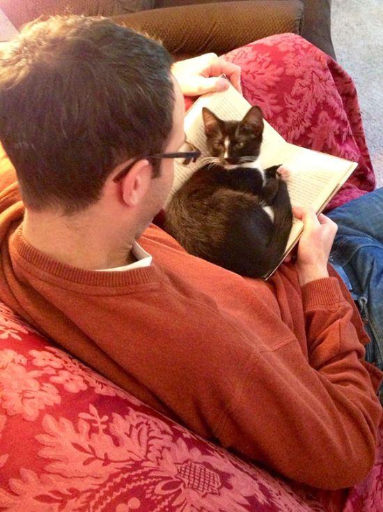 Gatos_que_querem_a_sua_atenção_no_momento_da_sua_leitura (8)