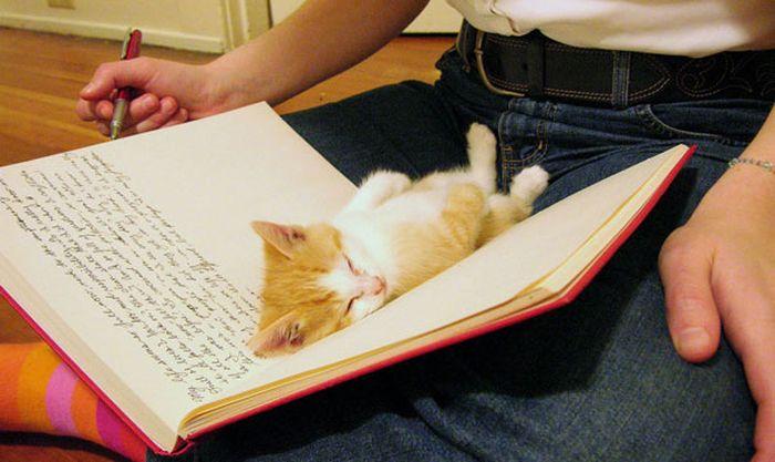 Gatos_que_querem_a_sua_atenção_no_momento_da_sua_leitura (9)