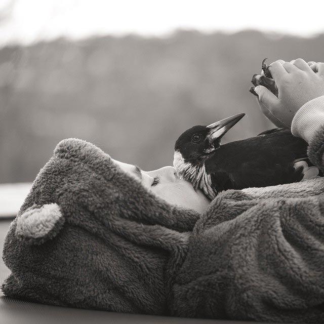 Penguin é o pássaro mais popular do Instagram (10)