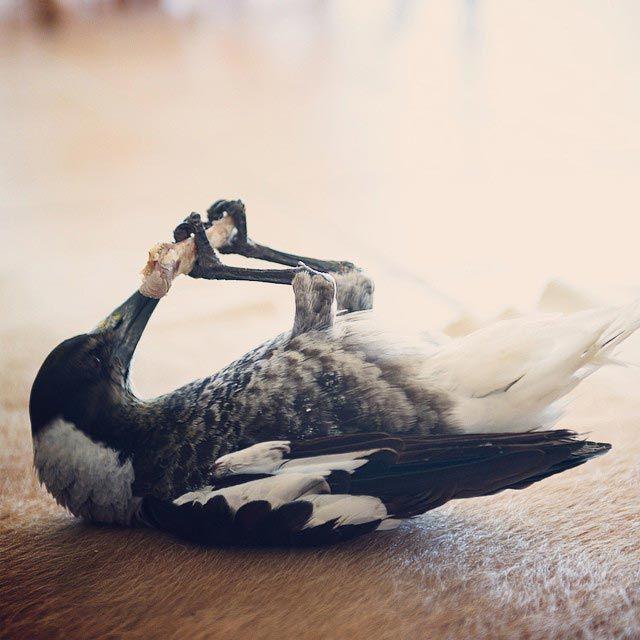 Penguin é o pássaro mais popular do Instagram (12)