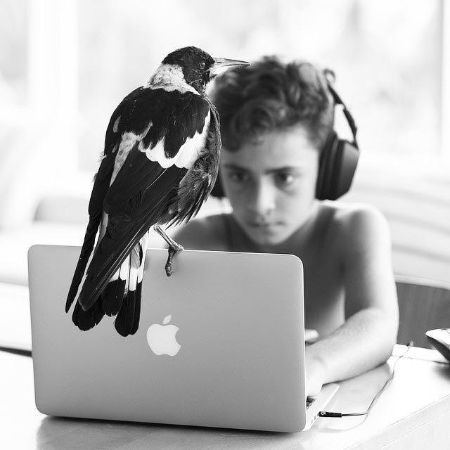 Penguin é o pássaro mais popular do Instagram (13)