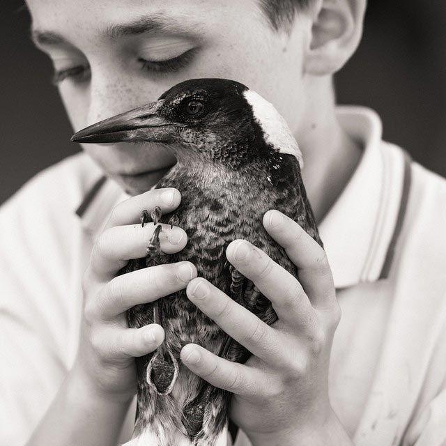 Penguin é o pássaro mais popular do Instagram (18)