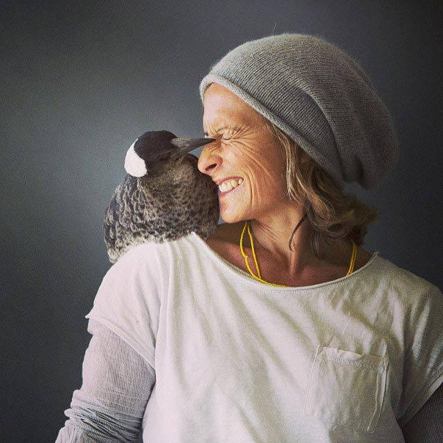 Penguin é o pássaro mais popular do Instagram (3)