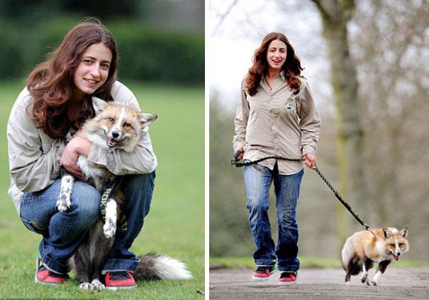 Raposa resgatada e criada por humanos pensa que é um cão (1)