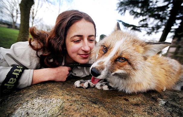 Raposa resgatada e criada por humanos pensa que é um cão (2)