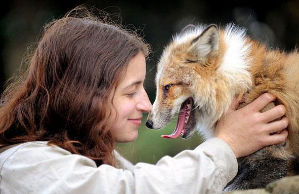 Raposa resgatada e criada por humanos pensa que é um cão (3)