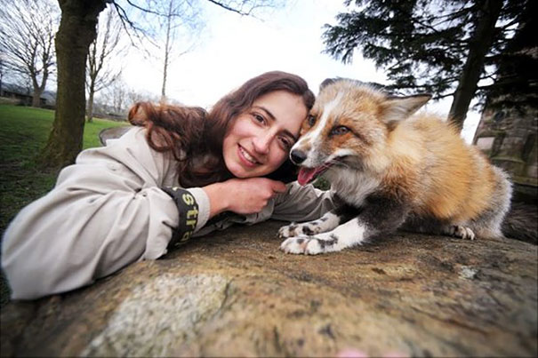 Raposa resgatada e criada por humanos pensa que é um cão (4)