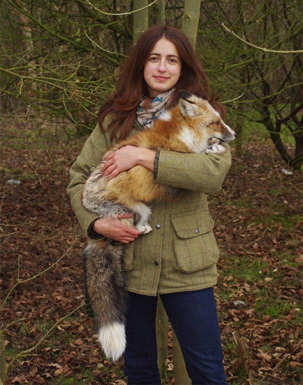 Raposa resgatada e criada por humanos pensa que é um cão (5)