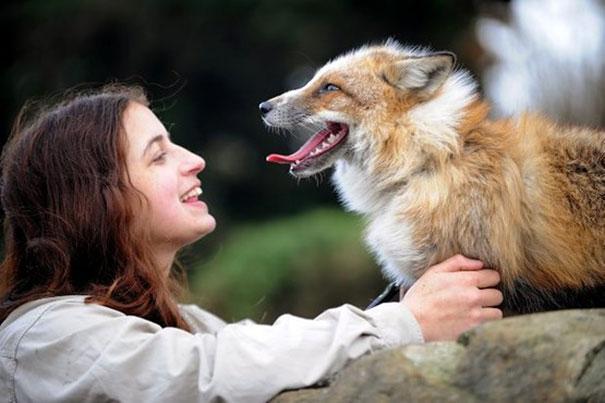 Raposa resgatada e criada por humanos pensa que é um cão (6)
