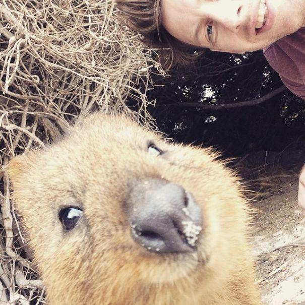 Tirar selfies com Quokkas é a nova moda na Austrália (10)