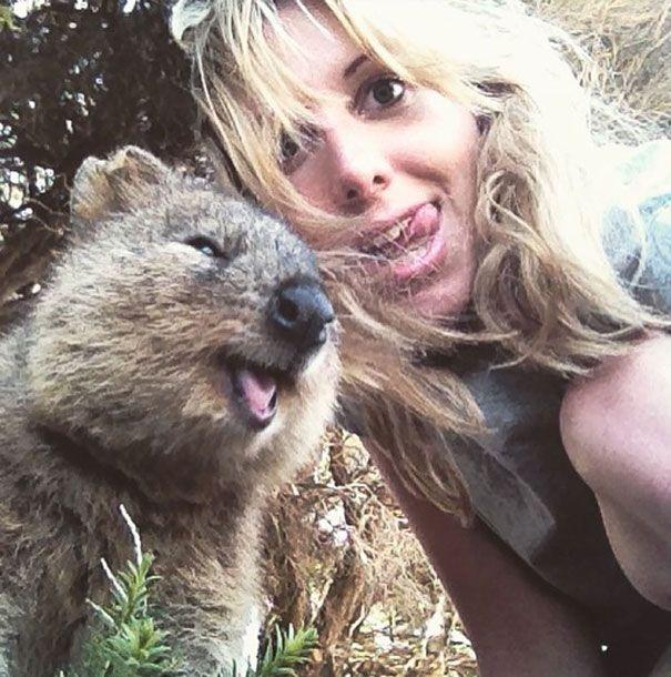 Tirar selfies com Quokkas é a nova moda na Austrália (12)