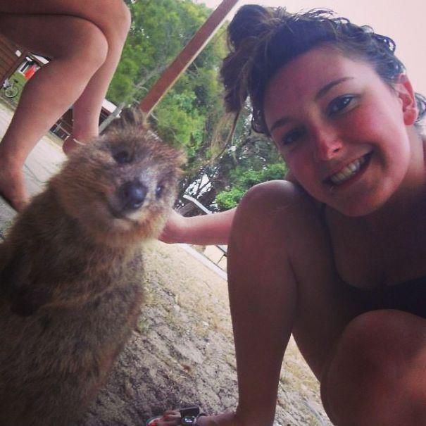 Tirar selfies com Quokkas é a nova moda na Austrália (13)