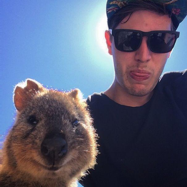 Tirar selfies com Quokkas é a nova moda na Austrália (14)