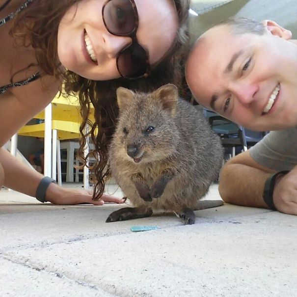 Tirar selfies com Quokkas é a nova moda na Austrália (16)