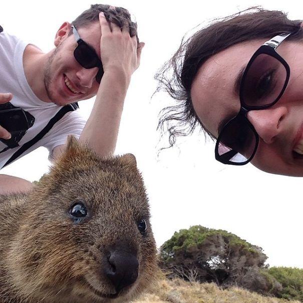 Tirar selfies com Quokkas é a nova moda na Austrália (17)