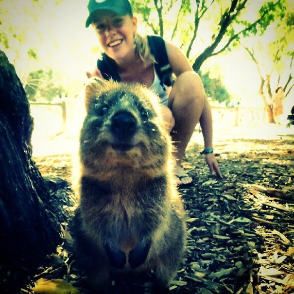 Tirar selfies com Quokkas é a nova moda na Austrália (18)