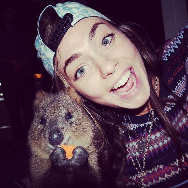 Tirar selfies com Quokkas é a nova moda na Austrália (19)