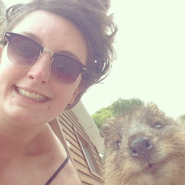 Tirar selfies com Quokkas é a nova moda na Austrália (20)