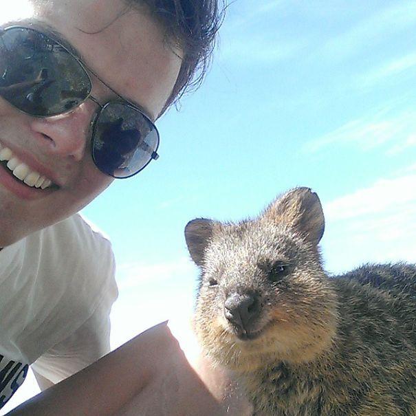 Tirar selfies com Quokkas é a nova moda na Austrália (24)