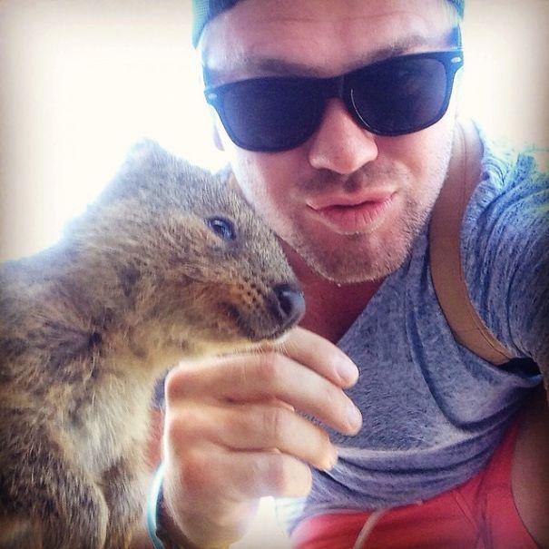Tirar selfies com Quokkas é a nova moda na Austrália (3)