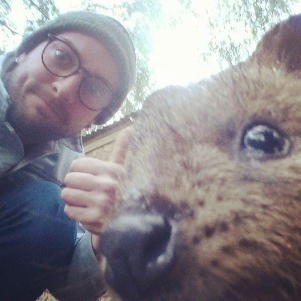 Tirar selfies com Quokkas é a nova moda na Austrália (4)