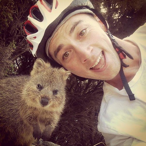 Tirar selfies com Quokkas é a nova moda na Austrália (8)