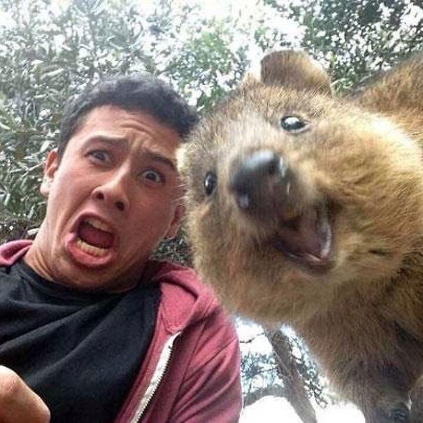 Tirar selfies com Quokkas é a nova moda na Austrália (9)