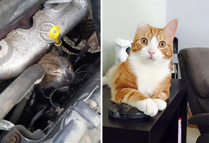 antes-e_depois_mostram_como_a_adoção_faz_bem_aos_gatos (1)