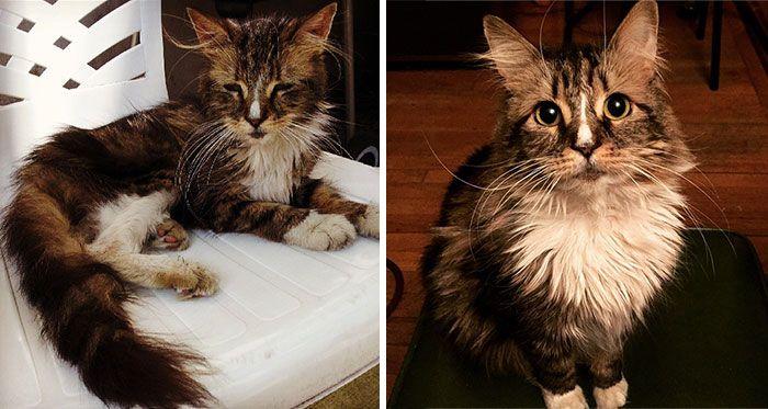 antes-e_depois_mostram_como_a_adoção_faz_bem_aos_gatos (10)