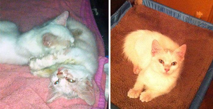 antes-e_depois_mostram_como_a_adoção_faz_bem_aos_gatos (15)
