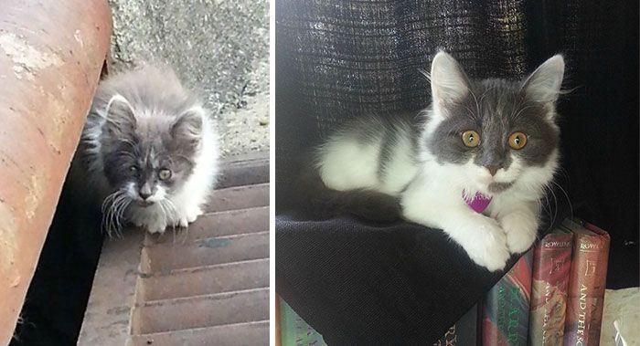 antes-e_depois_mostram_como_a_adoção_faz_bem_aos_gatos (18)