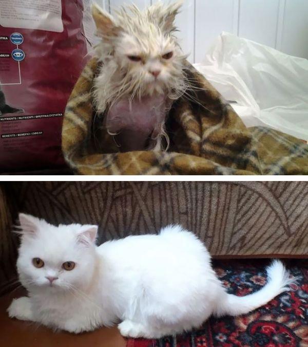 antes-e_depois_mostram_como_a_adoção_faz_bem_aos_gatos (2)