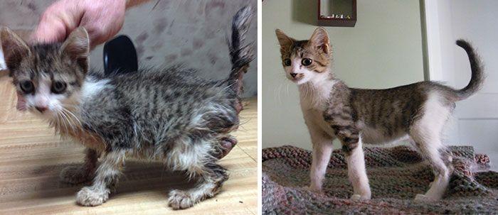 antes-e_depois_mostram_como_a_adoção_faz_bem_aos_gatos (20)
