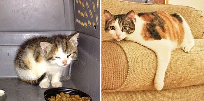 antes-e_depois_mostram_como_a_adoção_faz_bem_aos_gatos (24)
