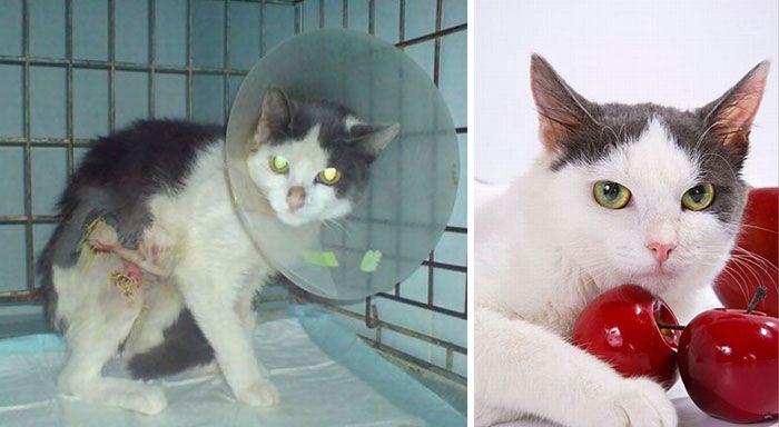 antes-e_depois_mostram_como_a_adoção_faz_bem_aos_gatos (25)