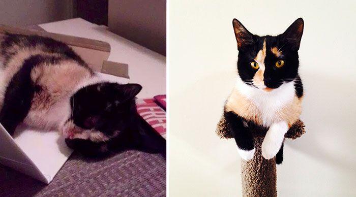 antes-e_depois_mostram_como_a_adoção_faz_bem_aos_gatos (28)