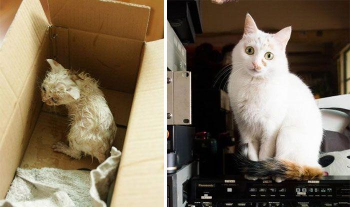Imagens de antes e depois mostram como a adoção faz bem aos gatos