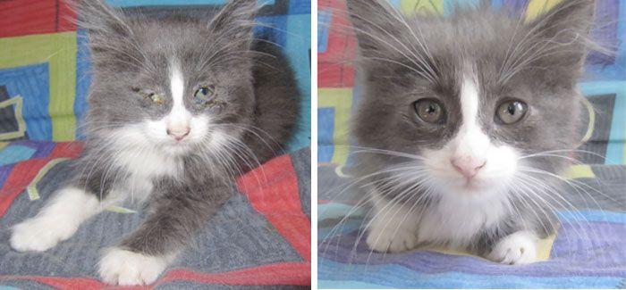 antes-e_depois_mostram_como_a_adoção_faz_bem_aos_gatos (5)