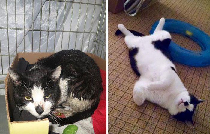 antes-e_depois_mostram_como_a_adoção_faz_bem_aos_gatos (8)