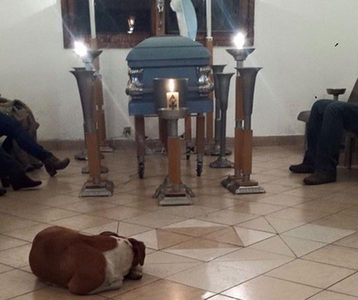 Cães_de_rua_vão_a_funeral_de_mulher_que_os_alimentava (1)